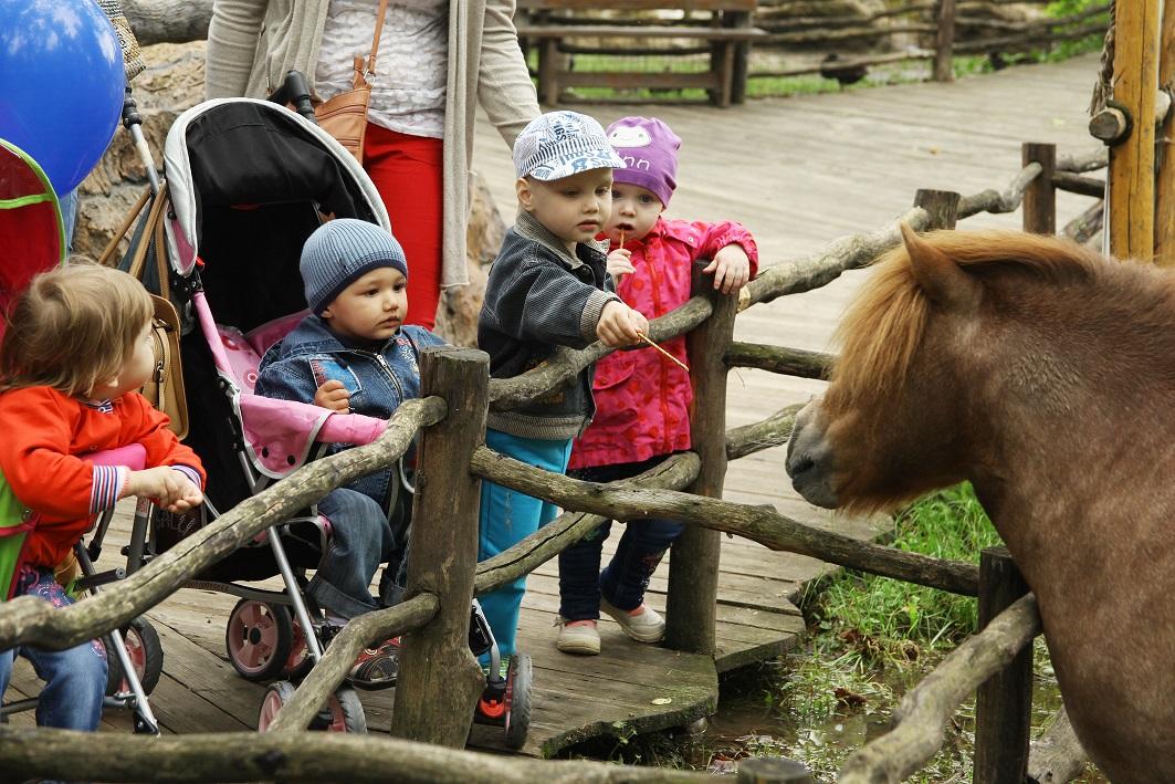 Выезд детей из дома ребенка при ФКУ ИК-3, п. Двубратский в сафари-парк, Краснодар